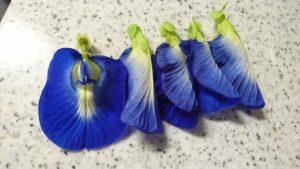 収穫したバタフライピーの花